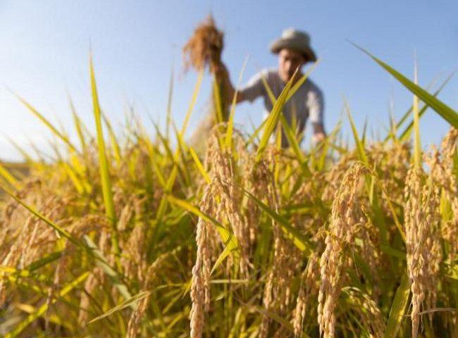 I giovani della provincia di Salerno scelgono l'agricoltura