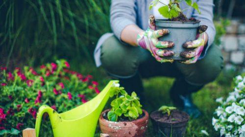 Bonus giardini, incentivi fino al 36% anche per le terrazze fiorite