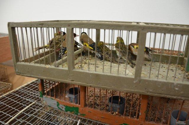 Sequestrati venti uccelli destinati al mercato nero
