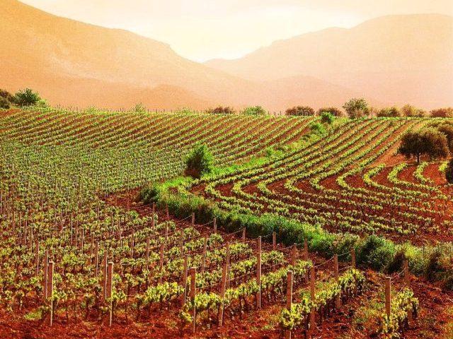 Agropoli, persone con autismo inserite in agricoltura