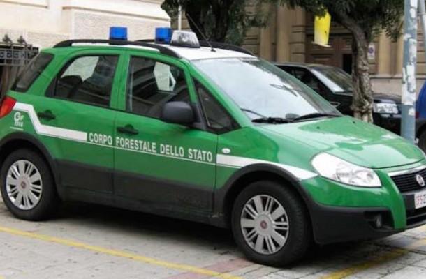Blitz dei carabinieri, sequestrati capi di bestiame