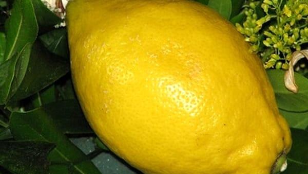 Emergenza Covid 19, raddoppiato il prezzo dei limoni. Allarme di Coldiretti