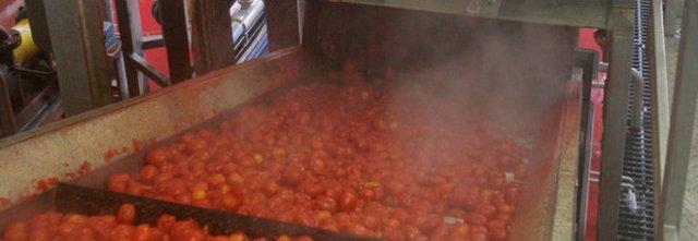 Conserve di pomodoro fuorilegge, sequestrate 7 tonnellate a Salerno
