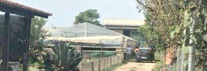 Pagani: 280 chili di marijuana nascosti  tra i pomodori, arrestati due coniugi