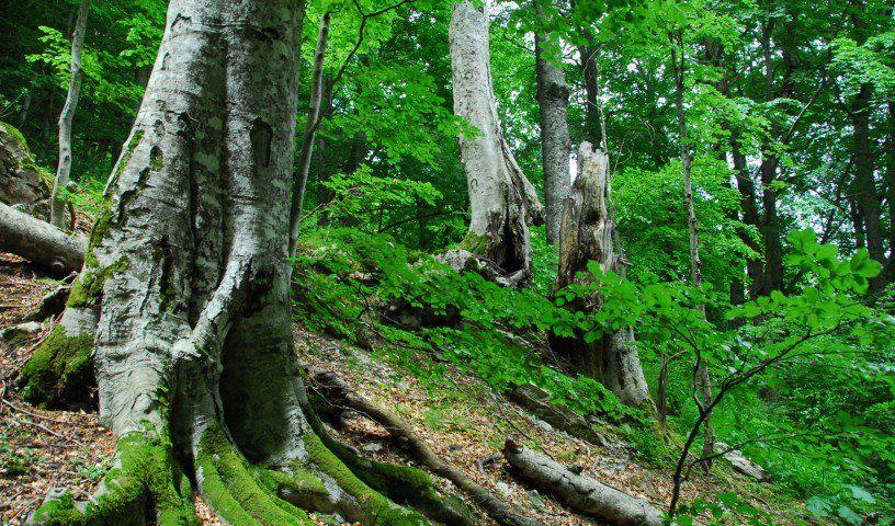 Piani di forestazione e bonifica montana: dalla Regione Campania 20 milioni di euro a comunità montane e amministrazioni provinciali