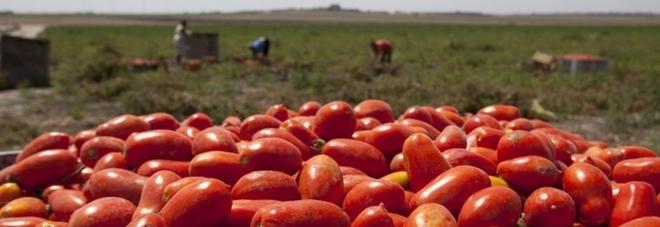 Passata di pomodoro scaduta, denunciato imprenditore nell'Agro