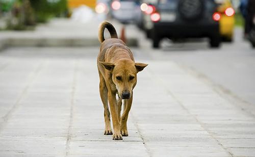 Cava, abbandona un cane: un 56enne denunciato in Procura