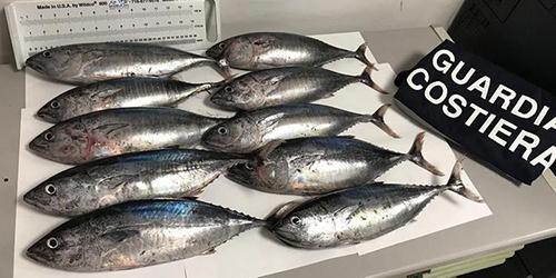 Pesce sottomisura o conservato male: maxi sequestro nel Cilento