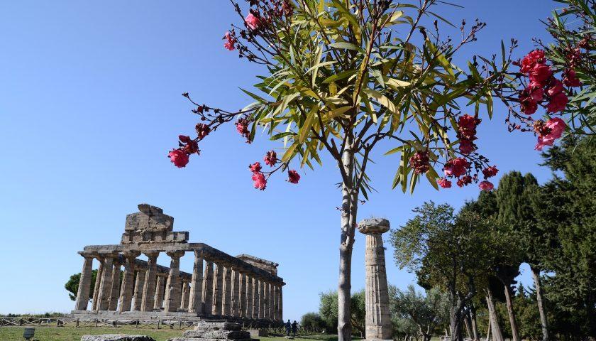 A Paestum si continua a scavare: grazie ad Antonio Amato la ricerca prosegue con due borse di studio