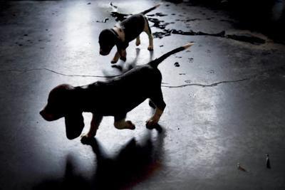 Cani uccisi con cibo avvelenato c'è la denuncia