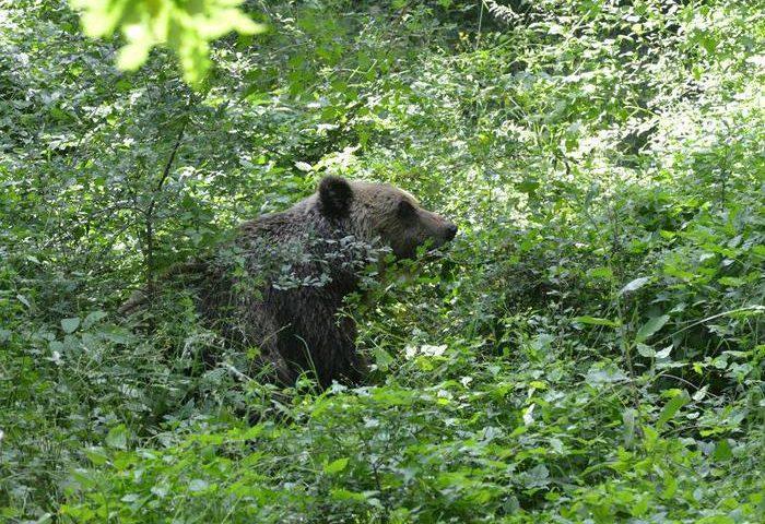 A 9 parchi italiani premio europeo per turismo sostenibile