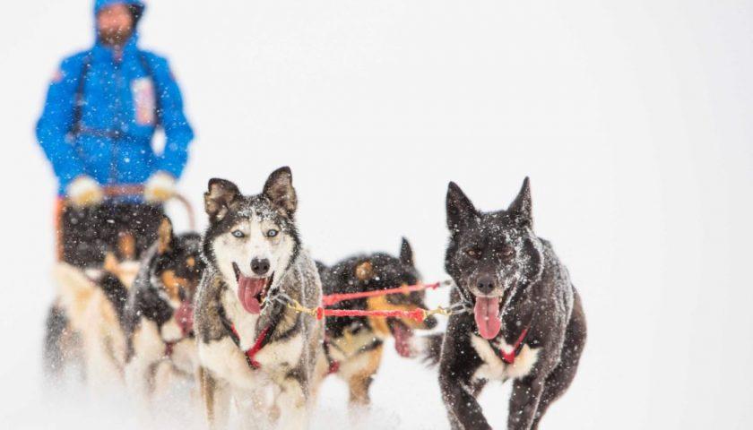 Cercasi volontari per un'avventura al Circolo Polare Artico in slitta