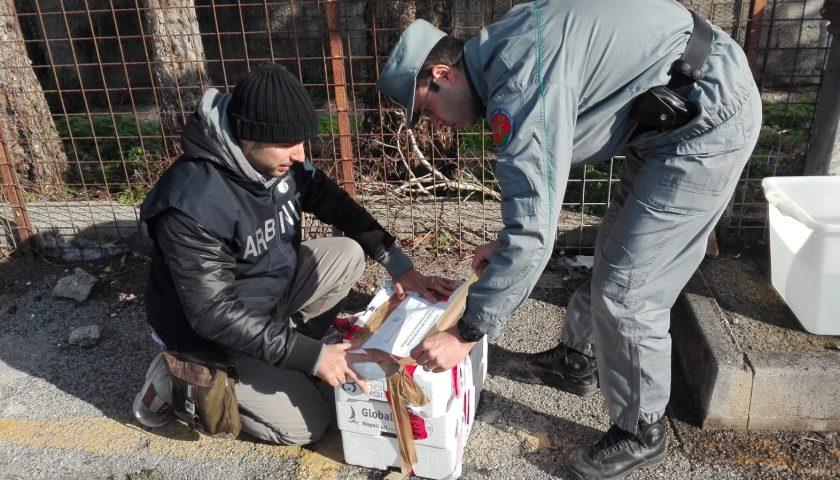 Controlli dei Carabinieri Forestale sui prodotti ittici: sequestrati 4 quintali di prodotti ed elevate 27 sanzioni