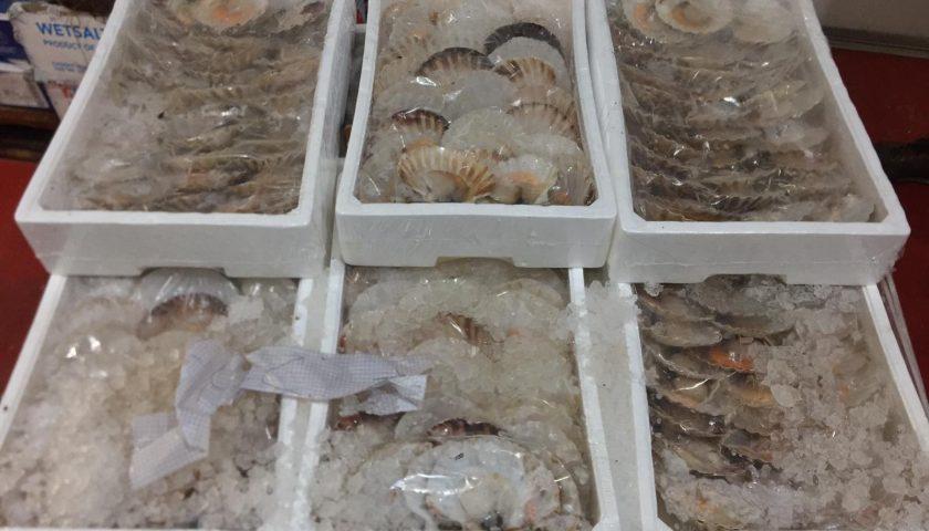 """Operazione """"Confine Illegale"""": la Guardia Costiera di Salerno sequestra 1425 kg. di prodotti ittici pescati illegalmente"""