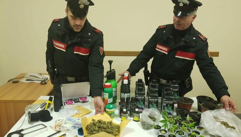 """Coltivazione di marijuana """"indoor"""": arrestato 35enne di Licusati"""