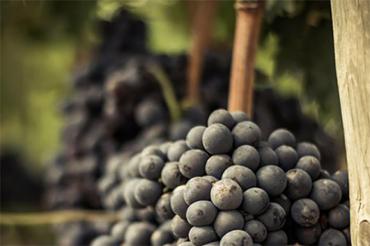 Il Movimento Turismo del Vino strumento per l'incoming