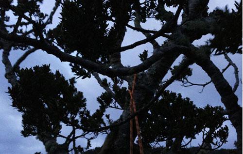 Iniziato abbattimento alberi malati in Via Rebecca Guarna a Salerno