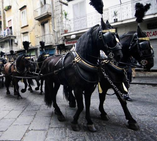 Roccapiemonte: botti durante funerale, muore cavallo carro funebre