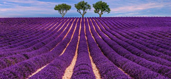 Viaggiare inseguendo i fiori dall'Olanda alle Azzorre