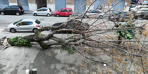 Verde pubblico a Salerno: adesione del Comitato 'Salviamo Piazza Alario'