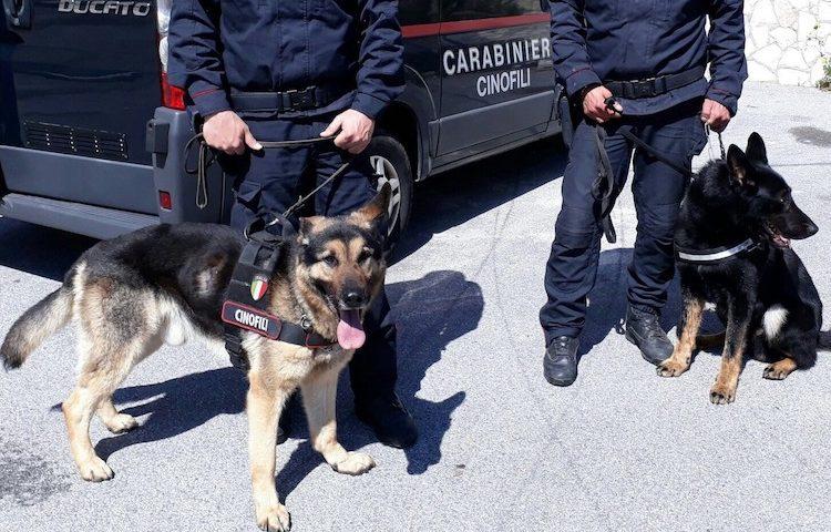 Sapri: spacciatore incastrato dal fiuto canino di Olli e Nino