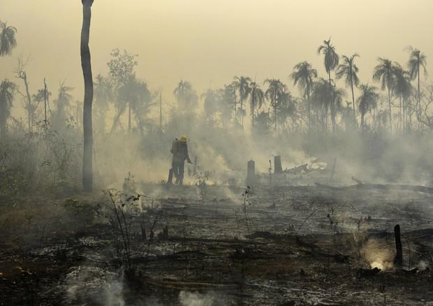 L'Amazzonia ha perso il 18% della foresta in 30 anni