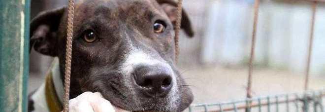 Scoperto canile abusivo a Pontecagnano: salvati 39 cani