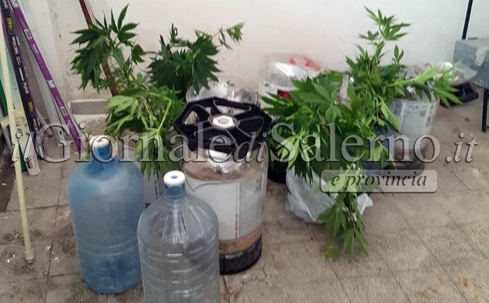 Giungano, imprenditore e la compagna incensurati arrestati per droga