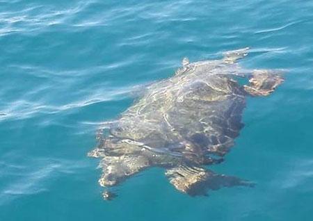 Pioppi: ecco il Turtle Center un nuovo approdo per le tartarughe in difficoltà