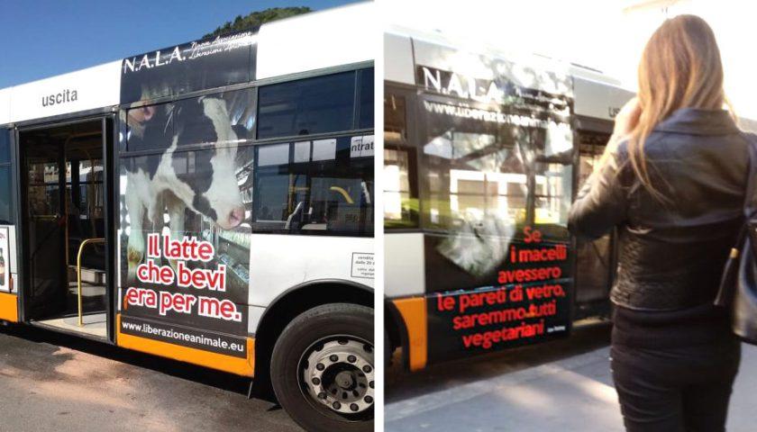 Salerno, la causa animalista viaggerà sui bus