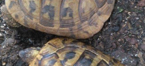 Animali protetti: sequestro a Scafati