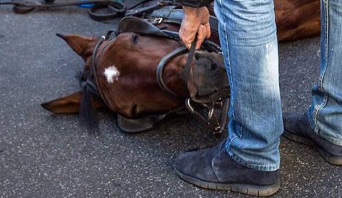 Cavalli sottoposti a troppi carichi denunciate otto persone