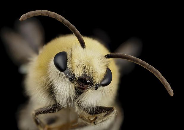 Le api sempre più brave in matematica