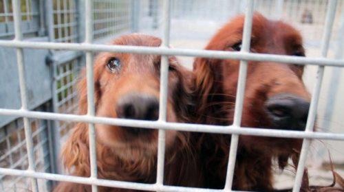 Al via iter legge per divieto di consumo della carne di cane