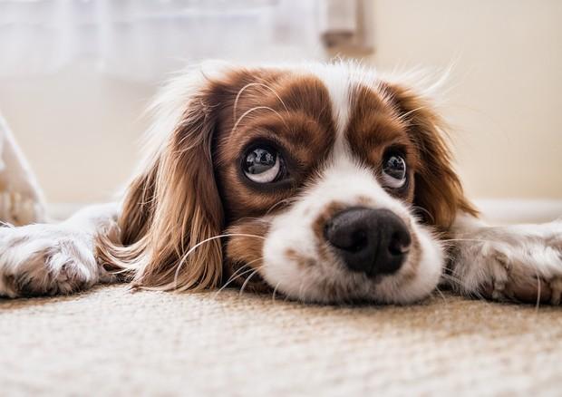 Lo stress di cani e uomini è 'sincronizzato'