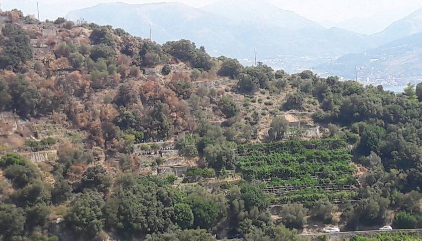 Incendio in località Erchie del comune di Maiori, denunciato l'autore