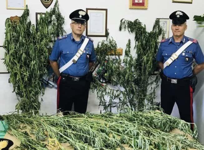 Tramonti: scoperta piantagione di marijuana a 1000 metri d'altitudine