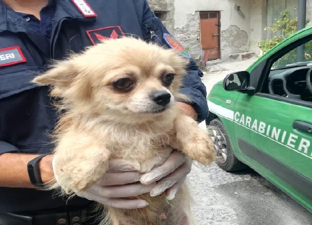 Cani maltrattati, tratti in salvo i cuccioli e denunciato l'autore