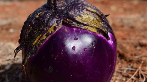 Svelati i segreti della melanzana e della sua biodiversità
