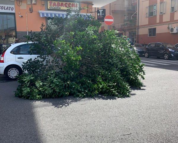Paura in via Santa Margherita, albero cade su auto in sosta a causa del forte vento