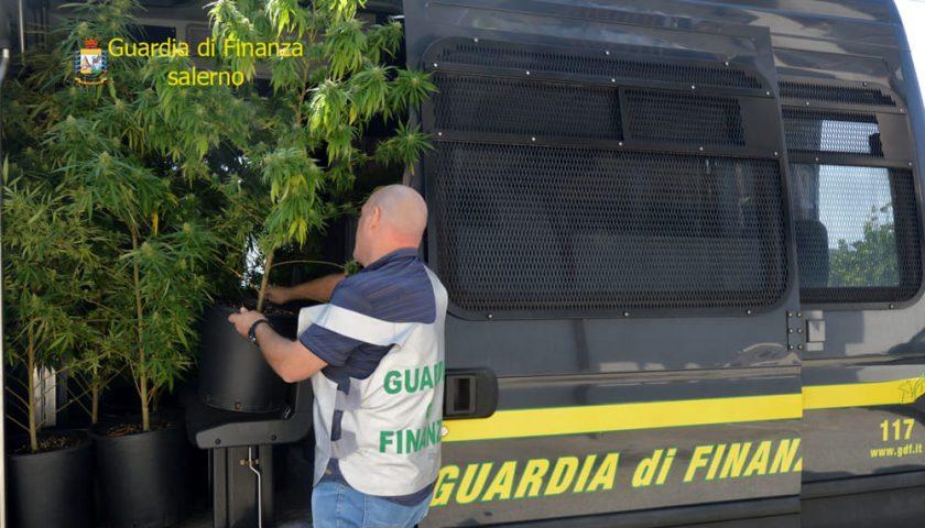 Coltivavapiante di marijuanain casa, arrestato 30enne salernitano