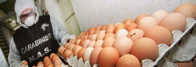 Uova alla salmonella, blitz dei Nas: sequestrati 32mila pezzi, c'è anche Salerno