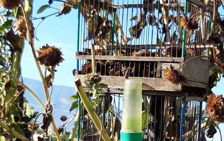 Operazione antibracconaggio nell'Agro Nocerino: denunciato un bracconiere per  uccellagione, furto venatorio e maltrattamento di animali