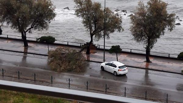 Maltempo: albero cade sul Lungomare Tafuri, tragedia sfiorata a Salerno