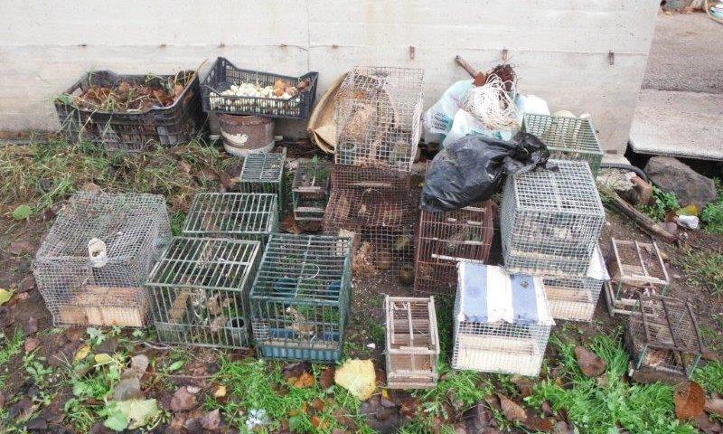 Detenzione di fauna protetta a San Valentino Torio: sequestrati 39 esemplari