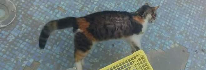 Pagani, gatto ucciso nella fontana di piazza Sant'Alfonso: caccia ai responsabili
