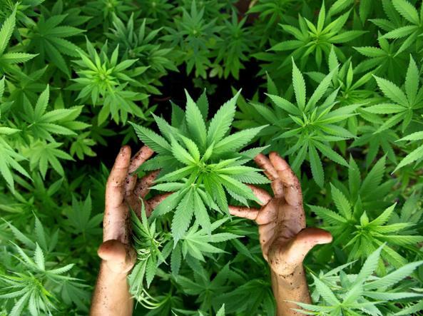 Capaccio, rinvenuti circa 4 kg di marijuana nei pressi di un noto Hotel