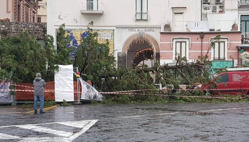 Paura ad Amalfi: vento sradica albero in piazza Flavio Gioia, nessun ferito