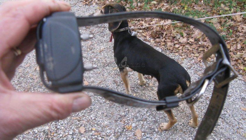 Cane smarrito a Castellabate, abbraccia il padrone dopo 10 anni grazie al microchip