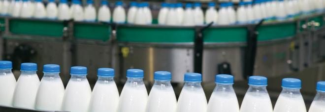 Le mani del clan dei casalesi sulla filiera del latte in Campania: tra gli arrestati anche Adolfo Greco, scarcerato appena ieri